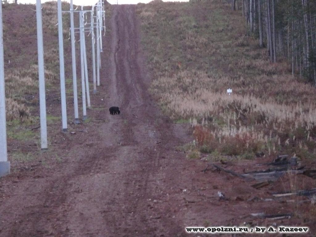 Полевое обследование опасных оползневых участков (Восточная Сибирь)